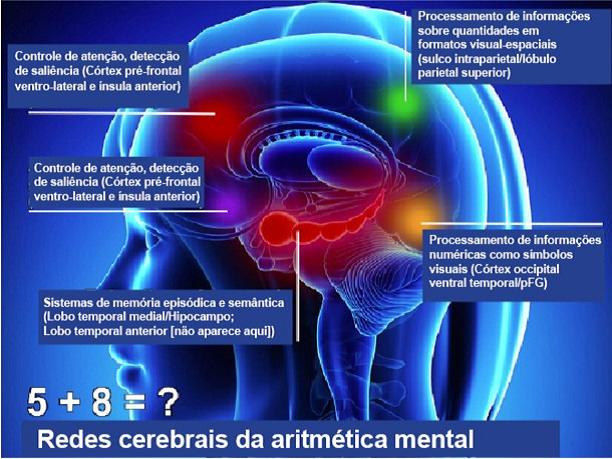 Matemática visual: a atividade cerebral está acontecendo em redes que incluem duas vias visuais: a ventral e a dorsal
